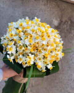 دسته گل نرگس 50 شاخه ای تازه