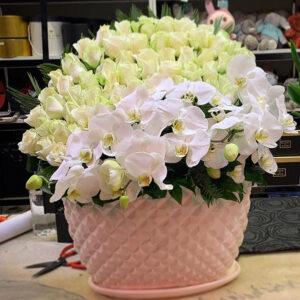 باکس گل رز سفید و ارکیده
